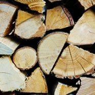 Quale è la migliore legna da ardere in vista dell'inverno?